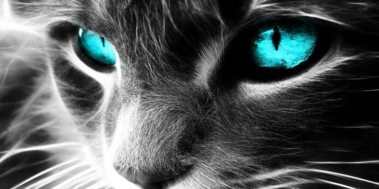espiritual gato poderes curativos