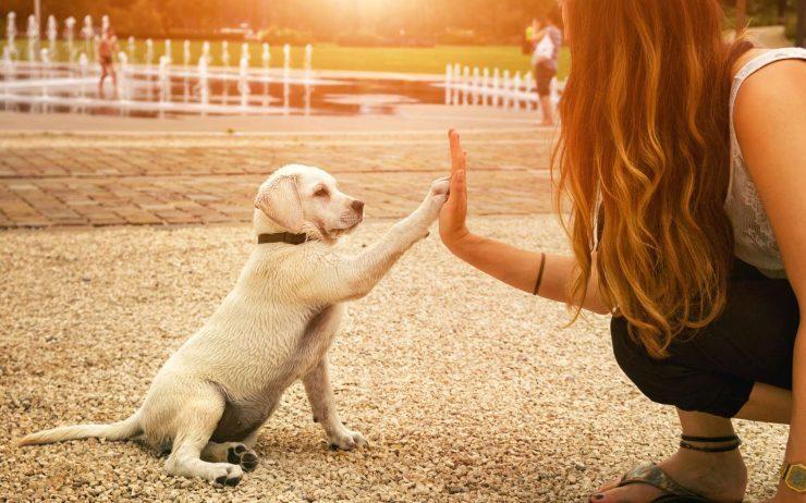 mision espiritual perro vida