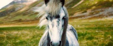 animal espiritual caballo