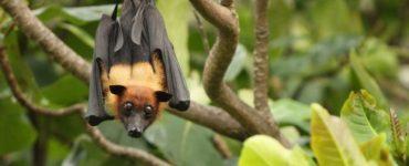 animal tótem murciélago