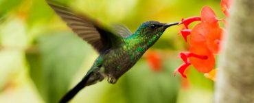 animal tótem colibrí