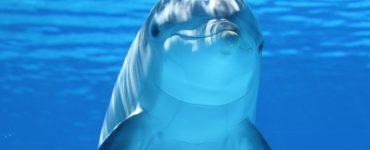 animal tótem delfín